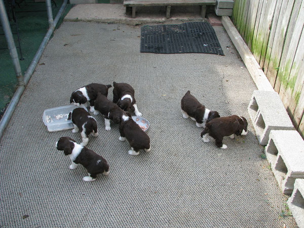 Puppies first day outside